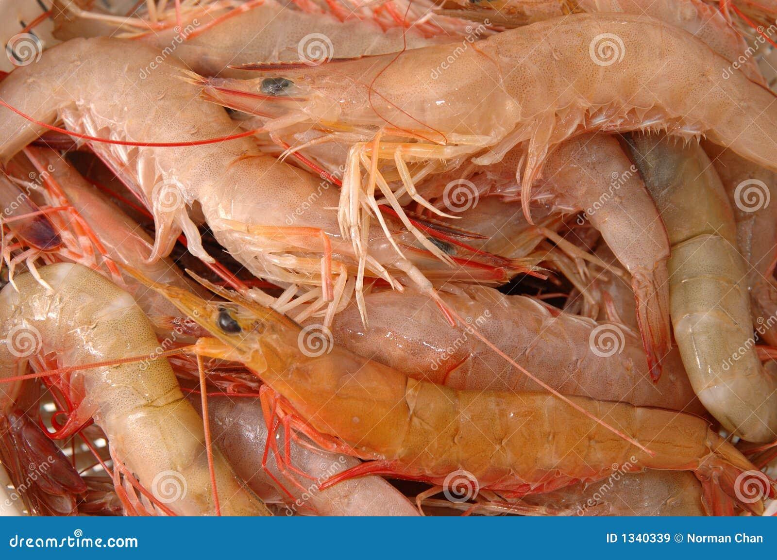 Live shrimp stock image. Image of ocean, meat, close, orange - 1340339