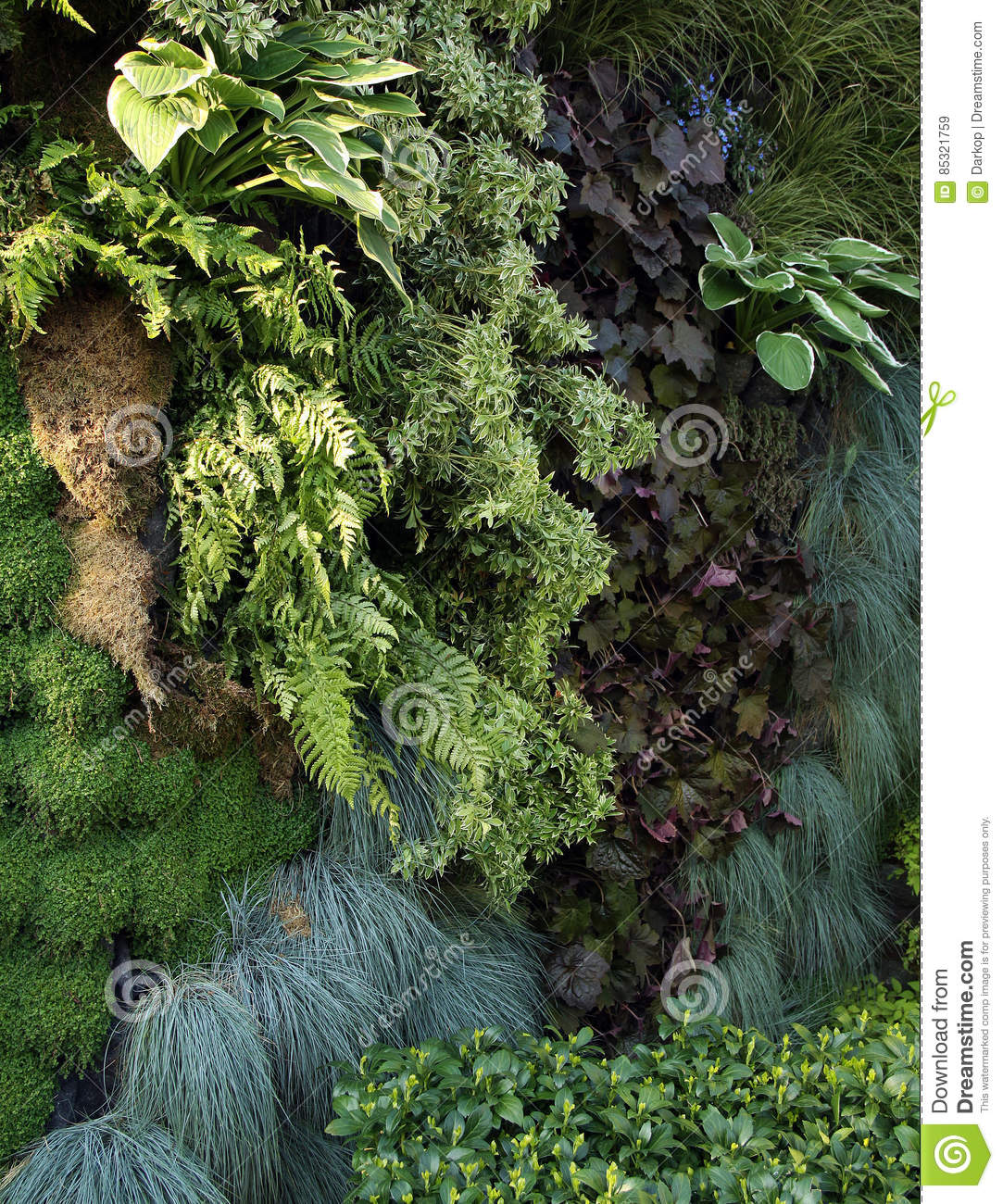 A Live Wall With Shade Plants Stock Image Image Of Fern