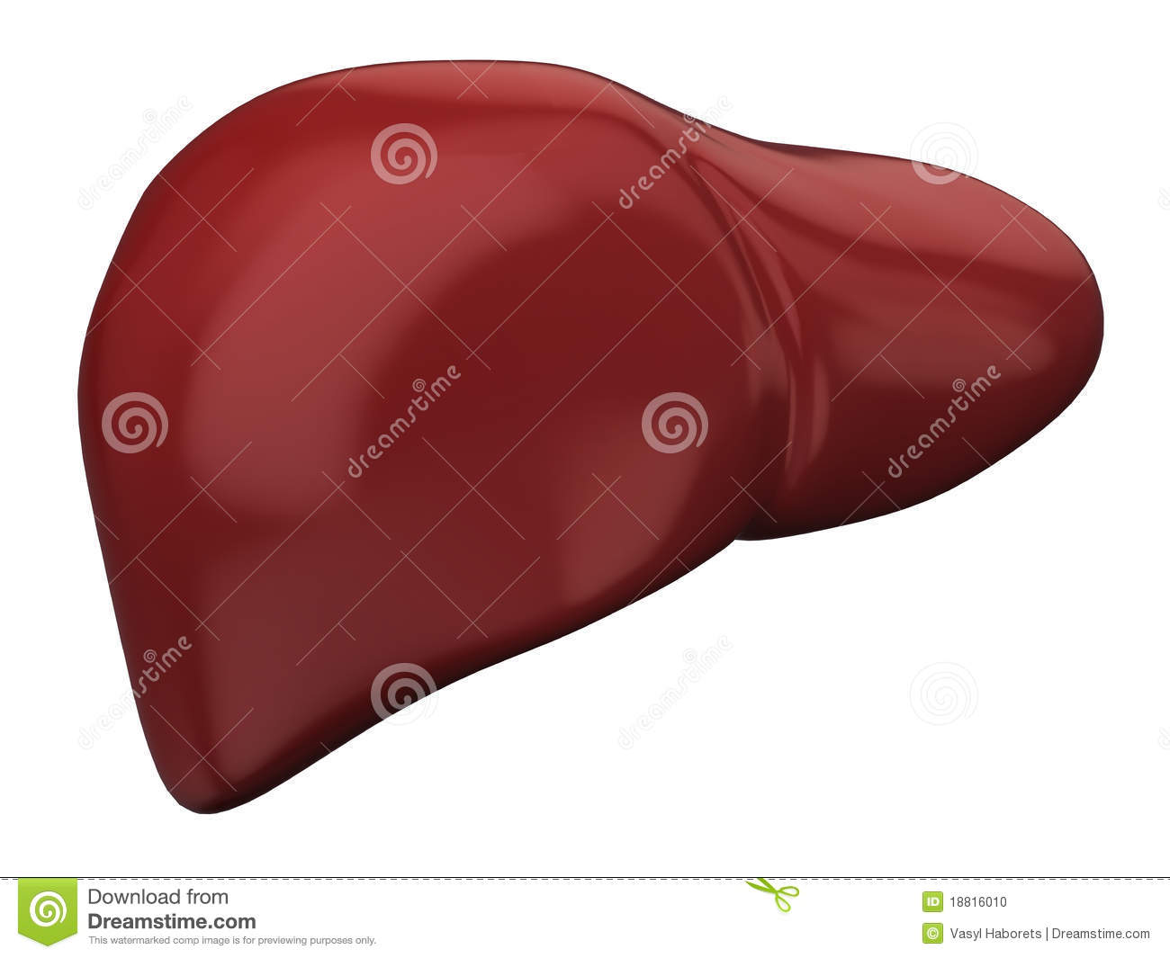 Concept illustration of human liver. Can be used for hepato