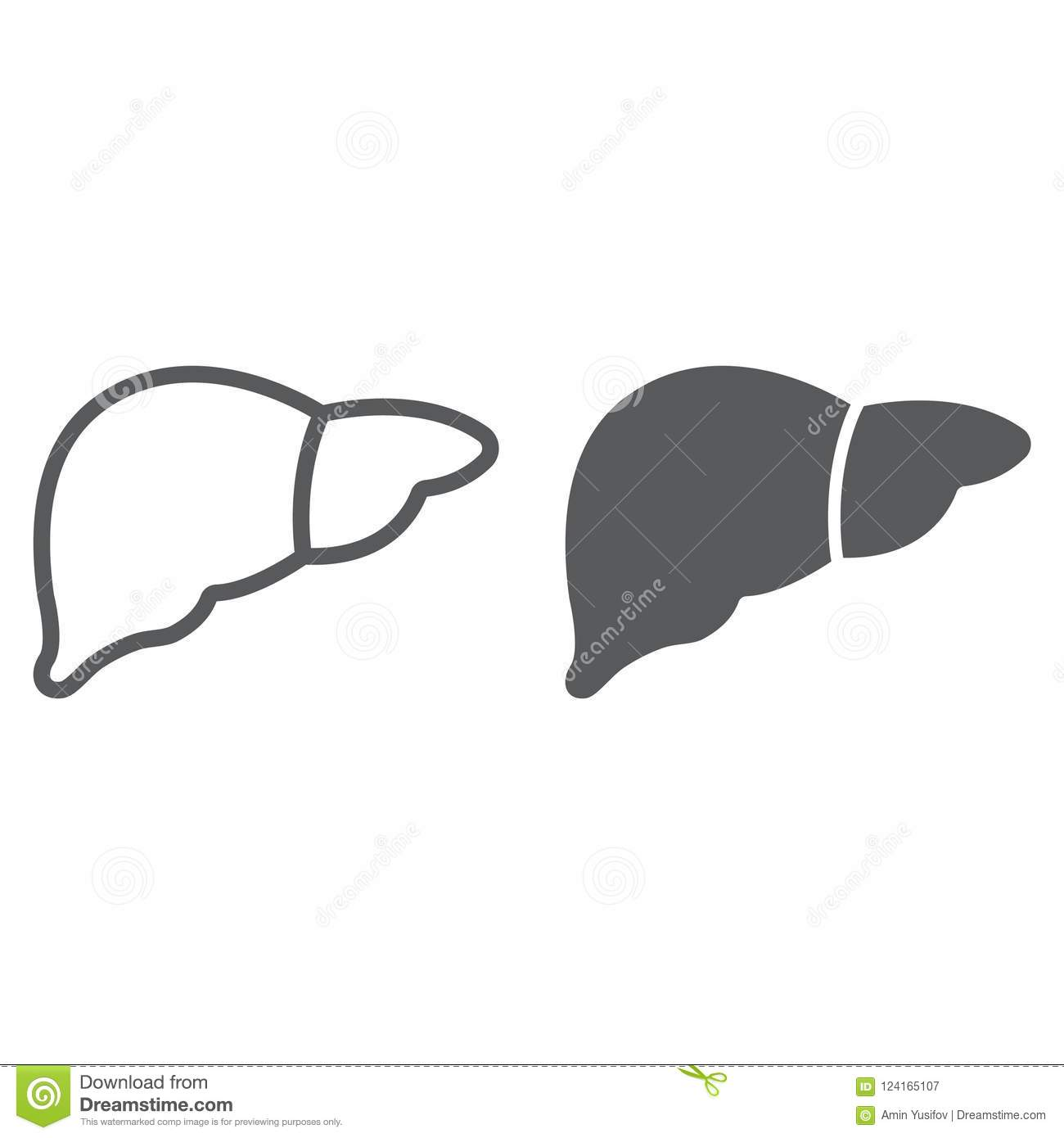 Liver Line And Glyph Icon Anatomy And Biology Stock Vector