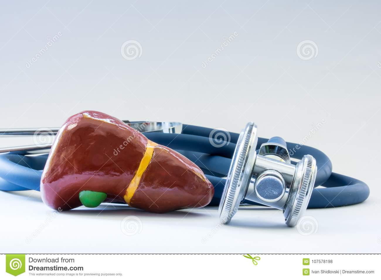 Liver near the stethoscope as a symbol of a health of organ, care, diagnostics, medical testing, treatment and prevention of disea