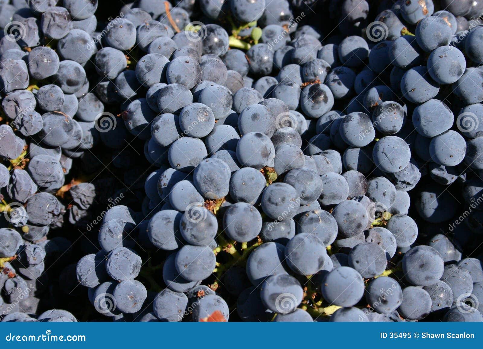 Livermore Grapes