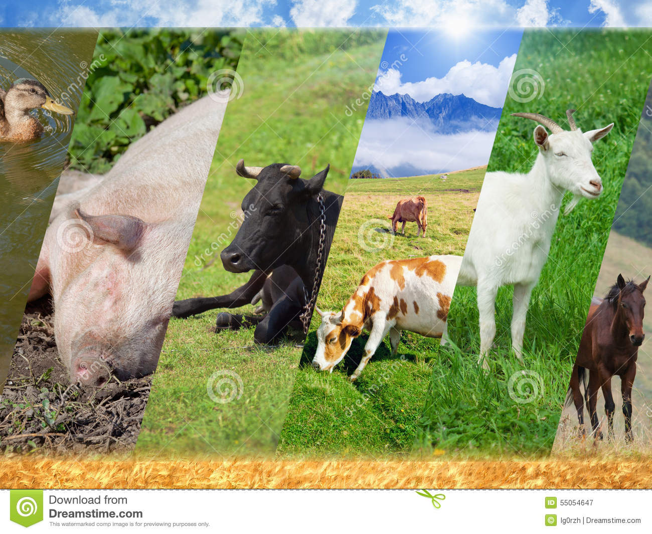 Livestock Collage Stock Photo - Image: 55054647