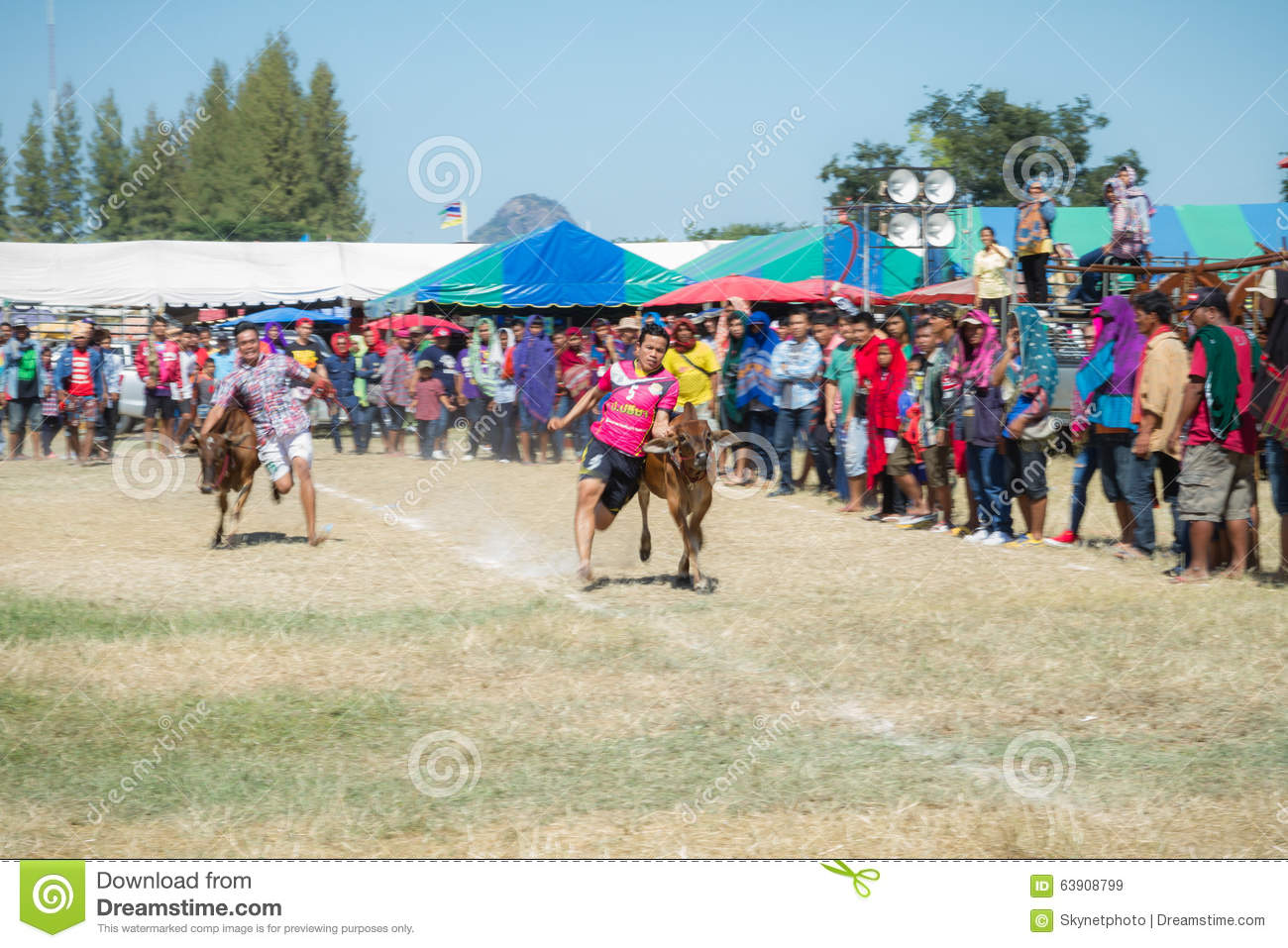 Prachuap Khiri Khan Thailand  city photos gallery : PRACHUAP KHIRI KHAN, THAILAND DECEMBER 12 : Tradition cow racing on ...