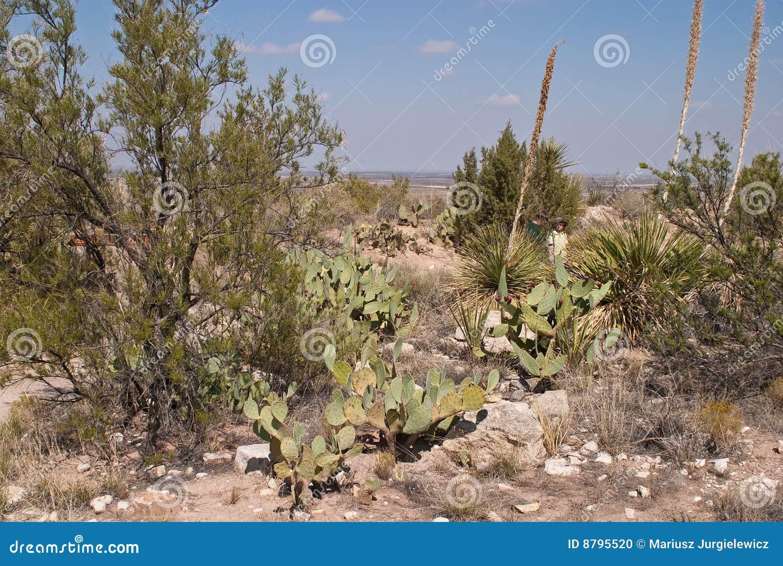 Living Desert Stock Photo Image 8795520