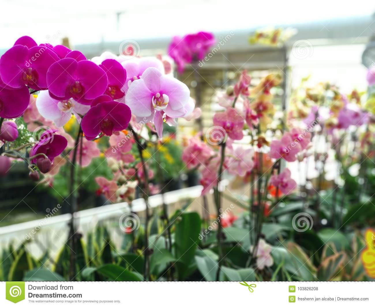 Download Living In A Greenhouse Stock Photo. Image Of Sold, Being    103826208