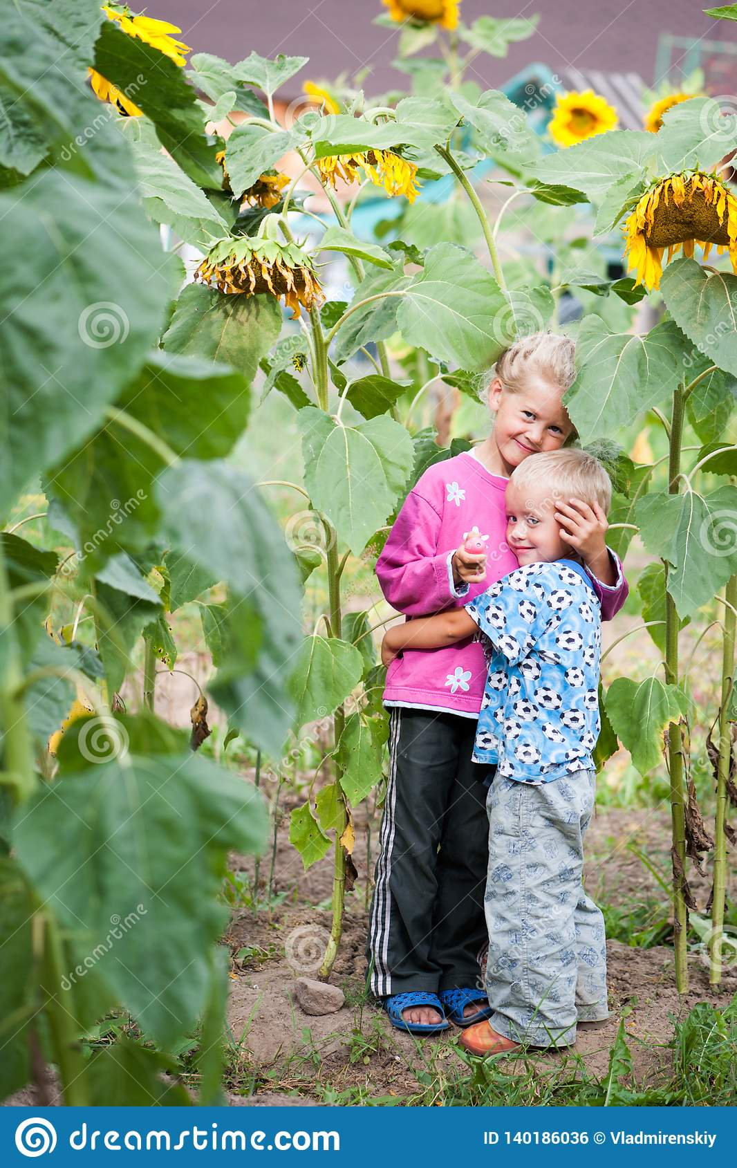 Living happy children brother and sister in the thickets of sunflower in the backyard of the farm