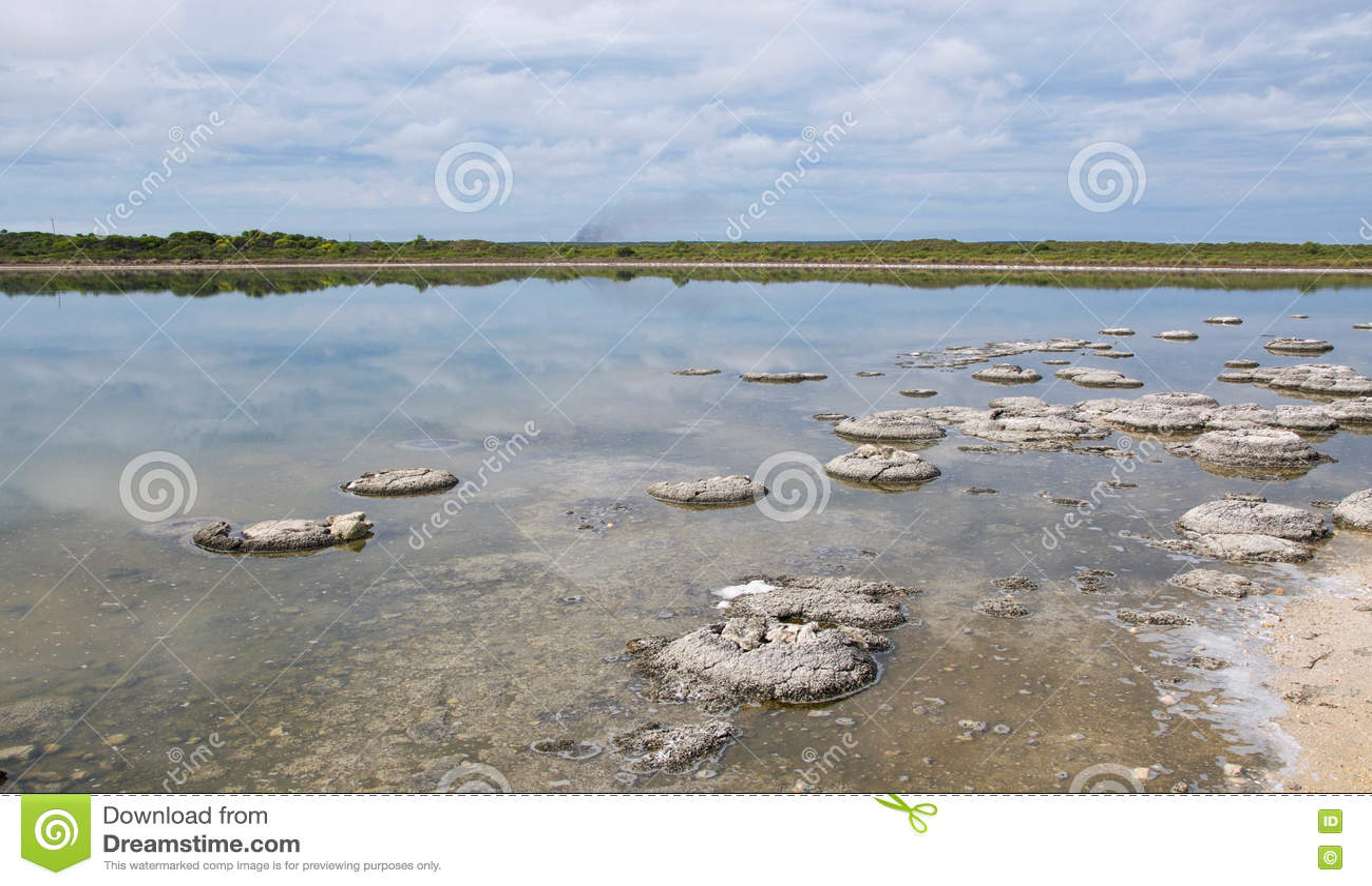 Marine Fossils In Lake Thetis Stock Image | CartoonDealer ...