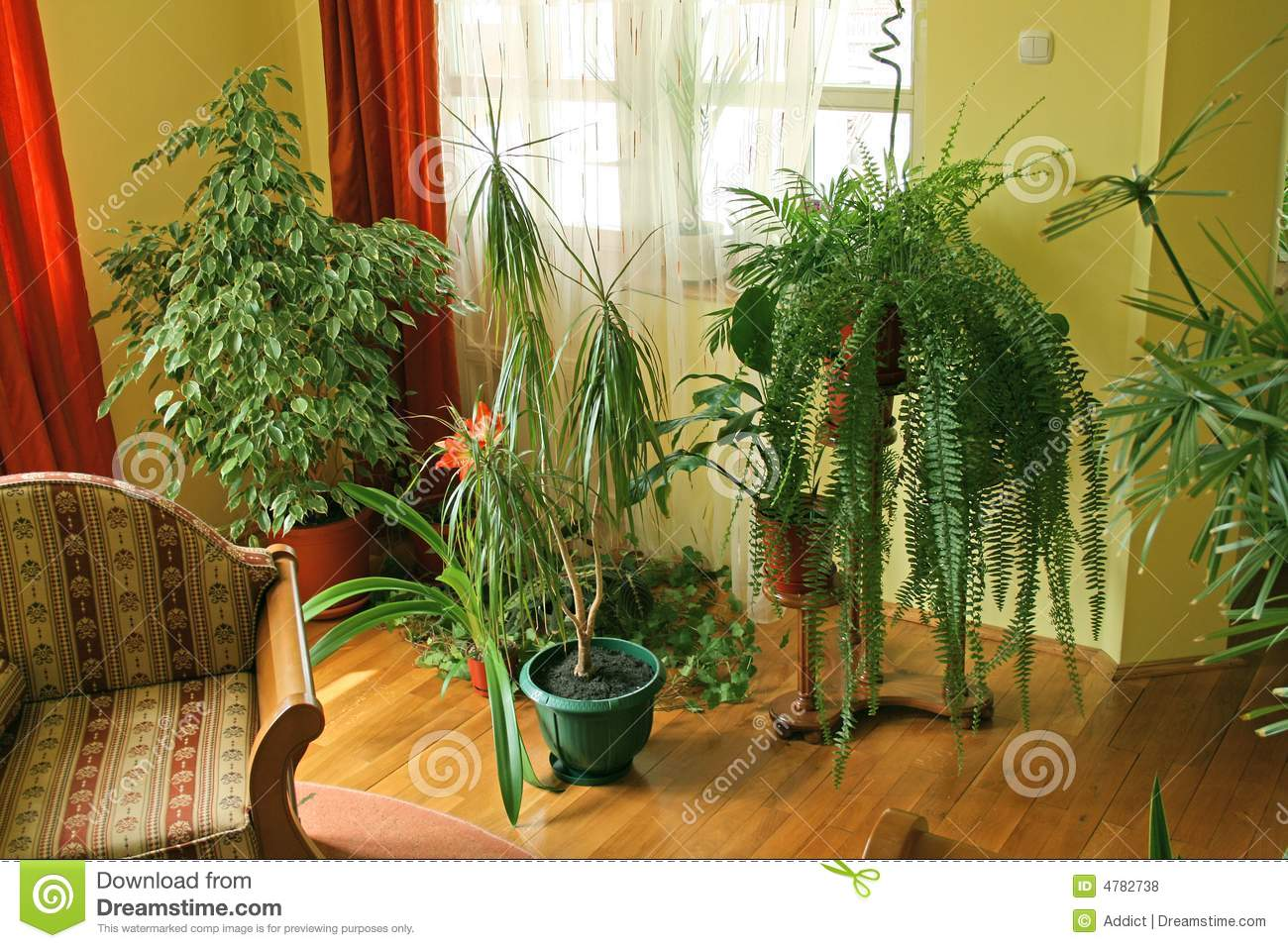 Living Room With Green Plants Stock Photo Image Of Dining Lifestyle 4782738