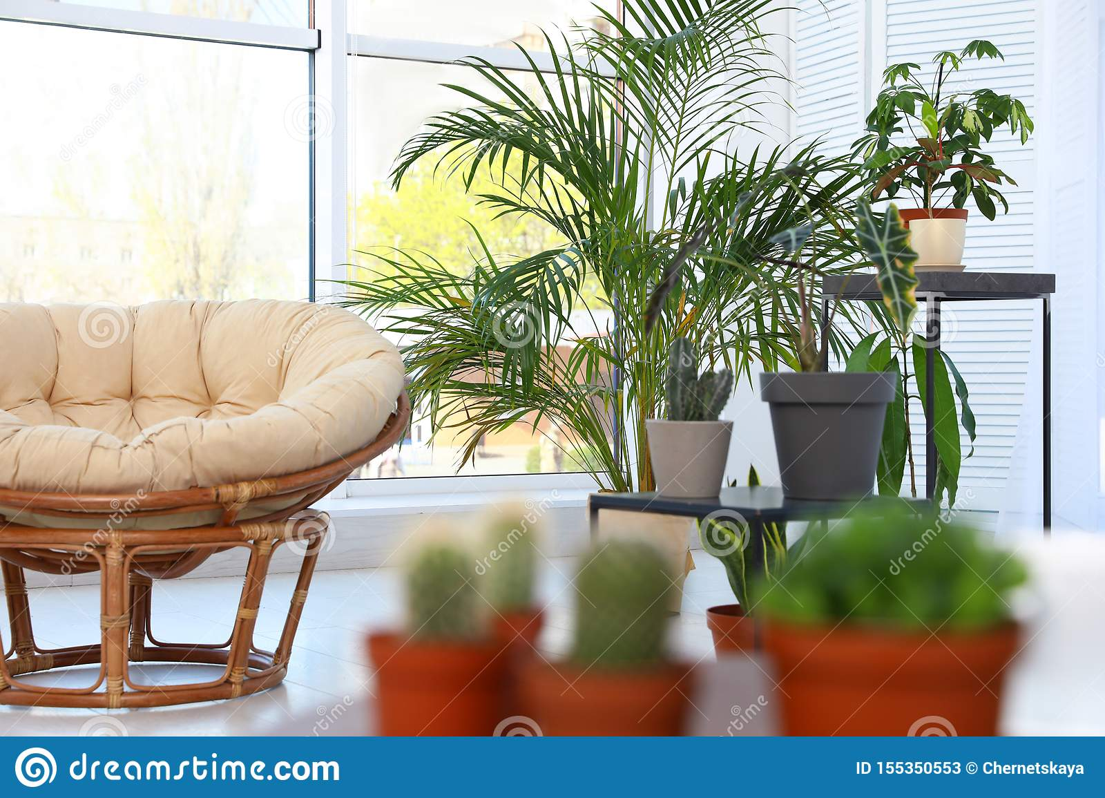 Living Room Interior With Chair And Indoor Plants Trendy Home Decor Stock Image Image Of Cozy Floral 155350553