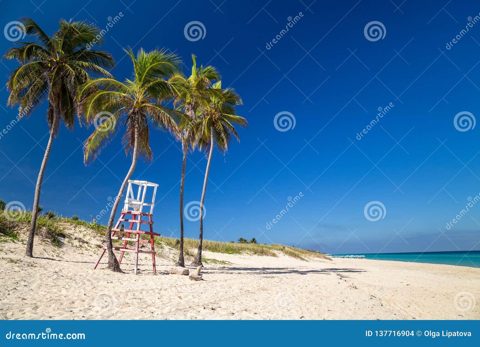 Livräddarestol under palmträd på en paradisstrand