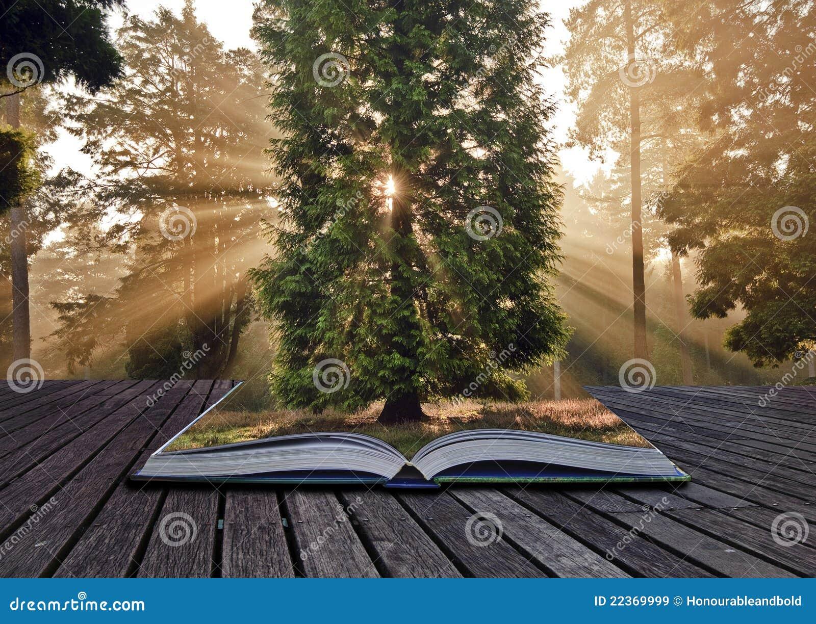Mon petit paradis des livres d'occasion dans Chroniques diverses livre-d-horizontal-de-for%C3%AAt-d-automne-d-automne-de-rayons-de-soleil-22369999