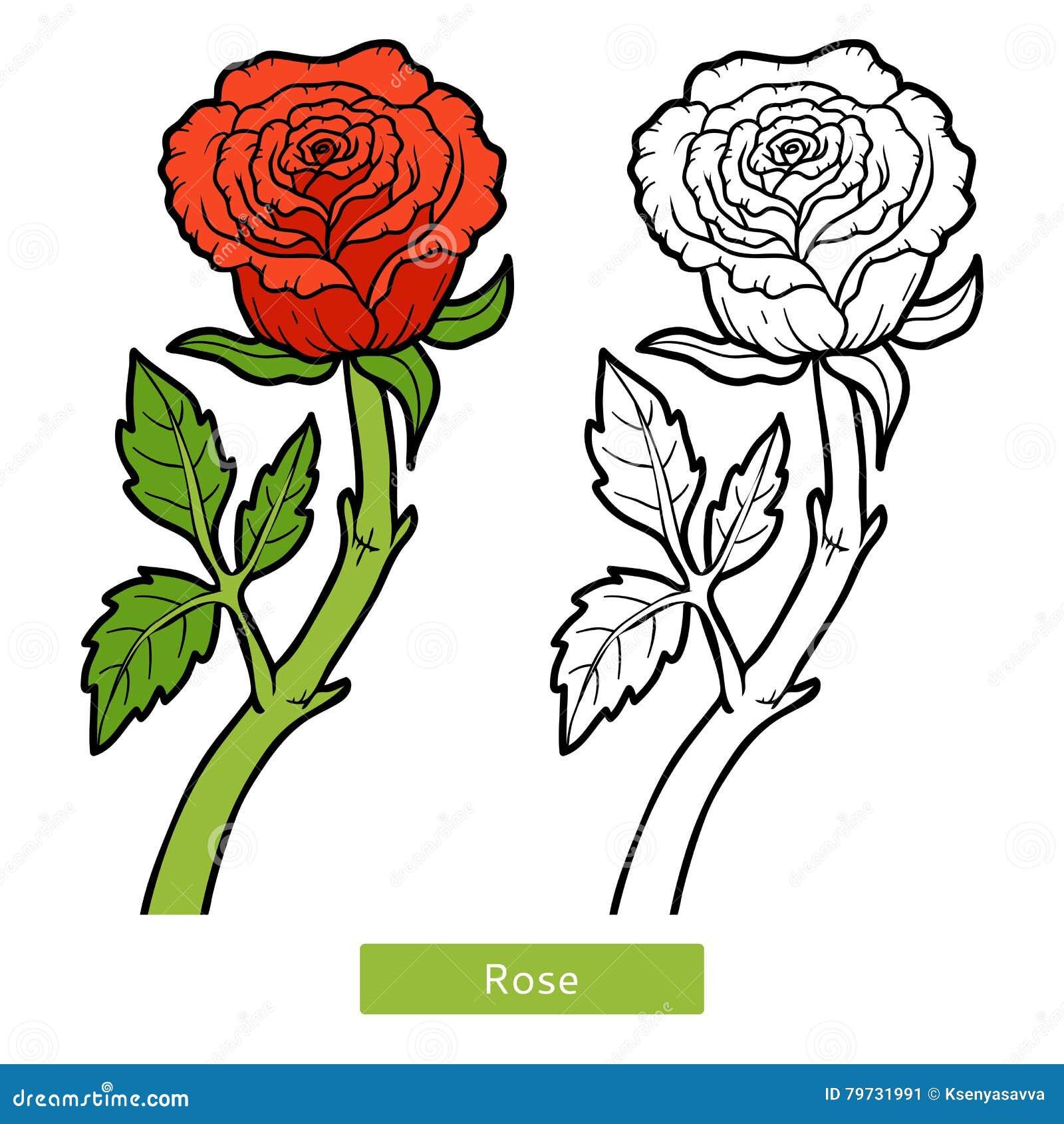 Coloriage Fleur.Livre De Coloriage Fleur Rose Illustration De Vecteur