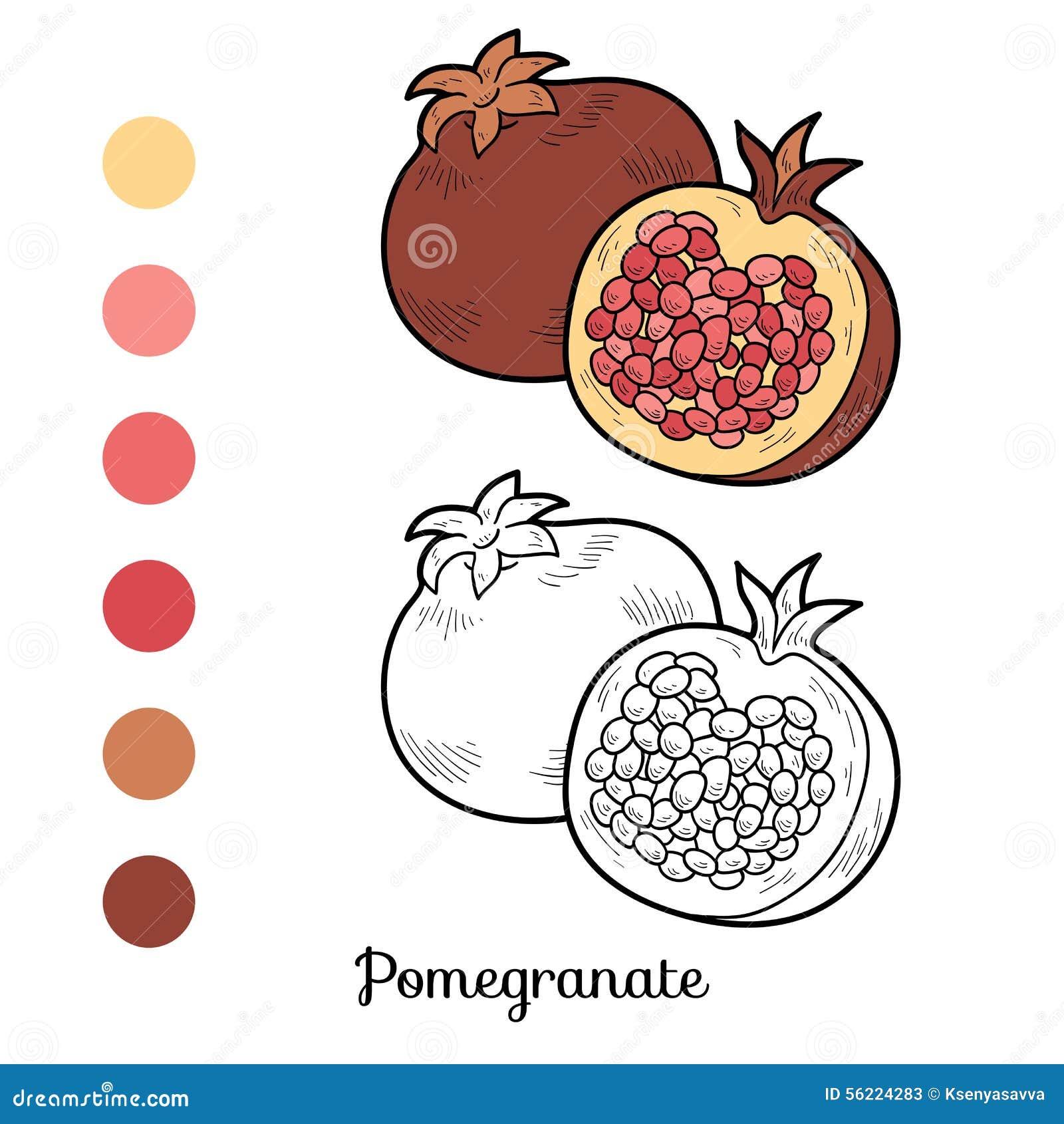 Livre de coloriage fruits et l gumes grenade illustration de vecteur image 56224283 - Grenade fruit dessin ...