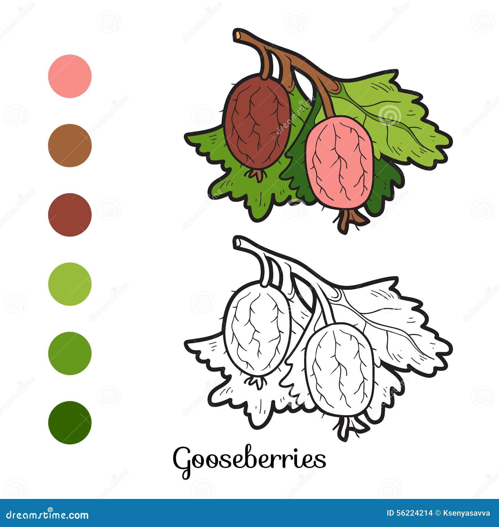 Livre de coloriage fruits et l gumes groseilles maquereau illustration de vecteur image - Fruits et legumes de a a z ...
