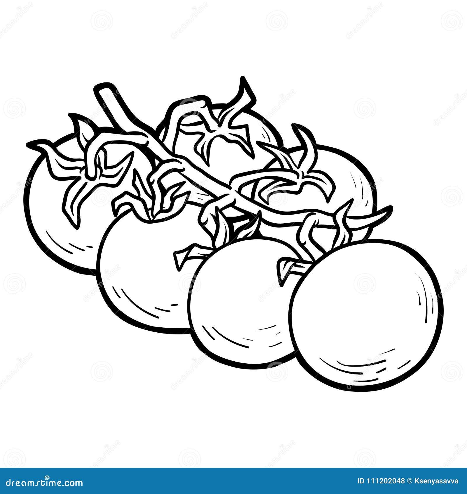 Livre De Coloriage Tomates Cerises Illustration De Vecteur