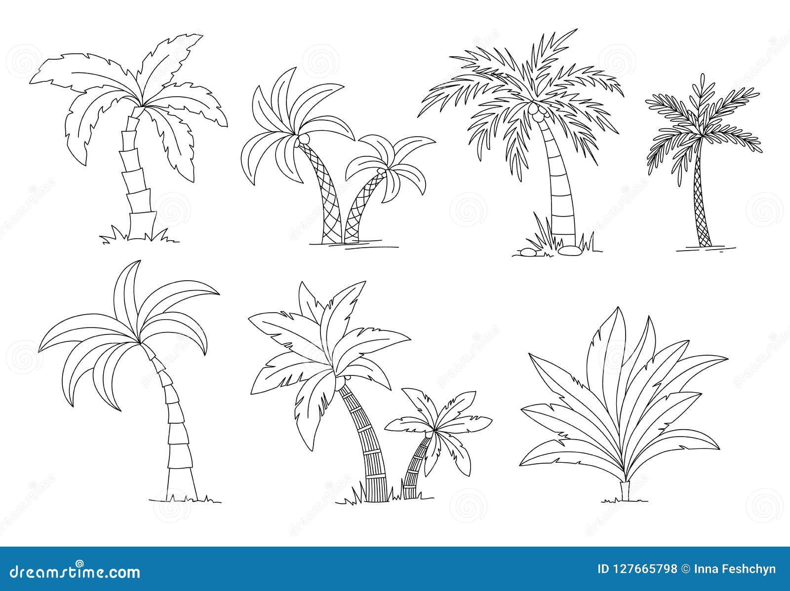 Livro para colorir das palmeiras Ilustração ajustada do vetor da árvore bonita do palma do vectro