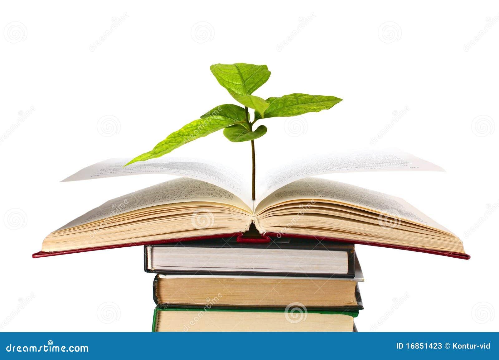 Livros e planta