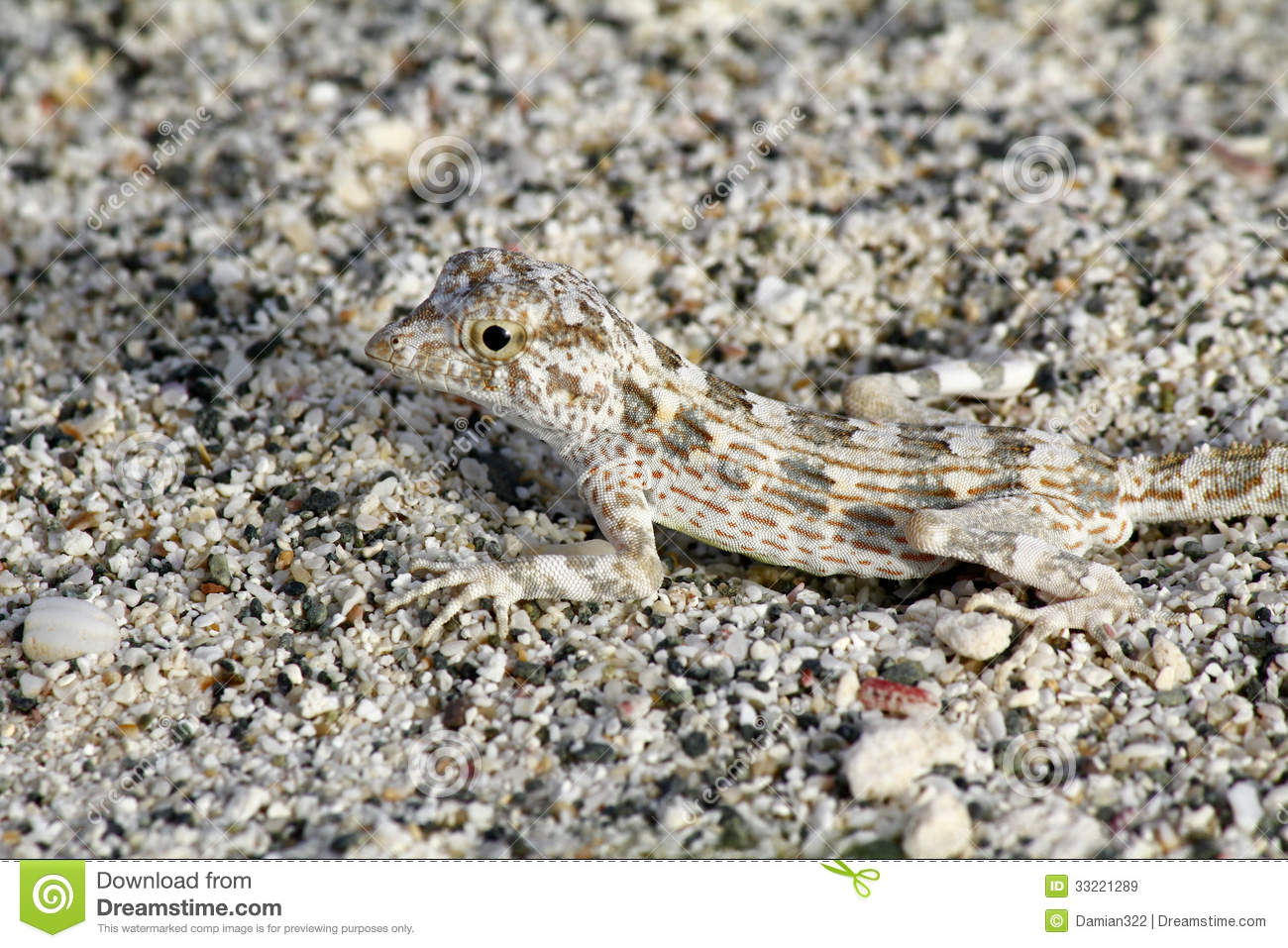 Camouflage/Owl And Lizards - Lessons - TES Teach
