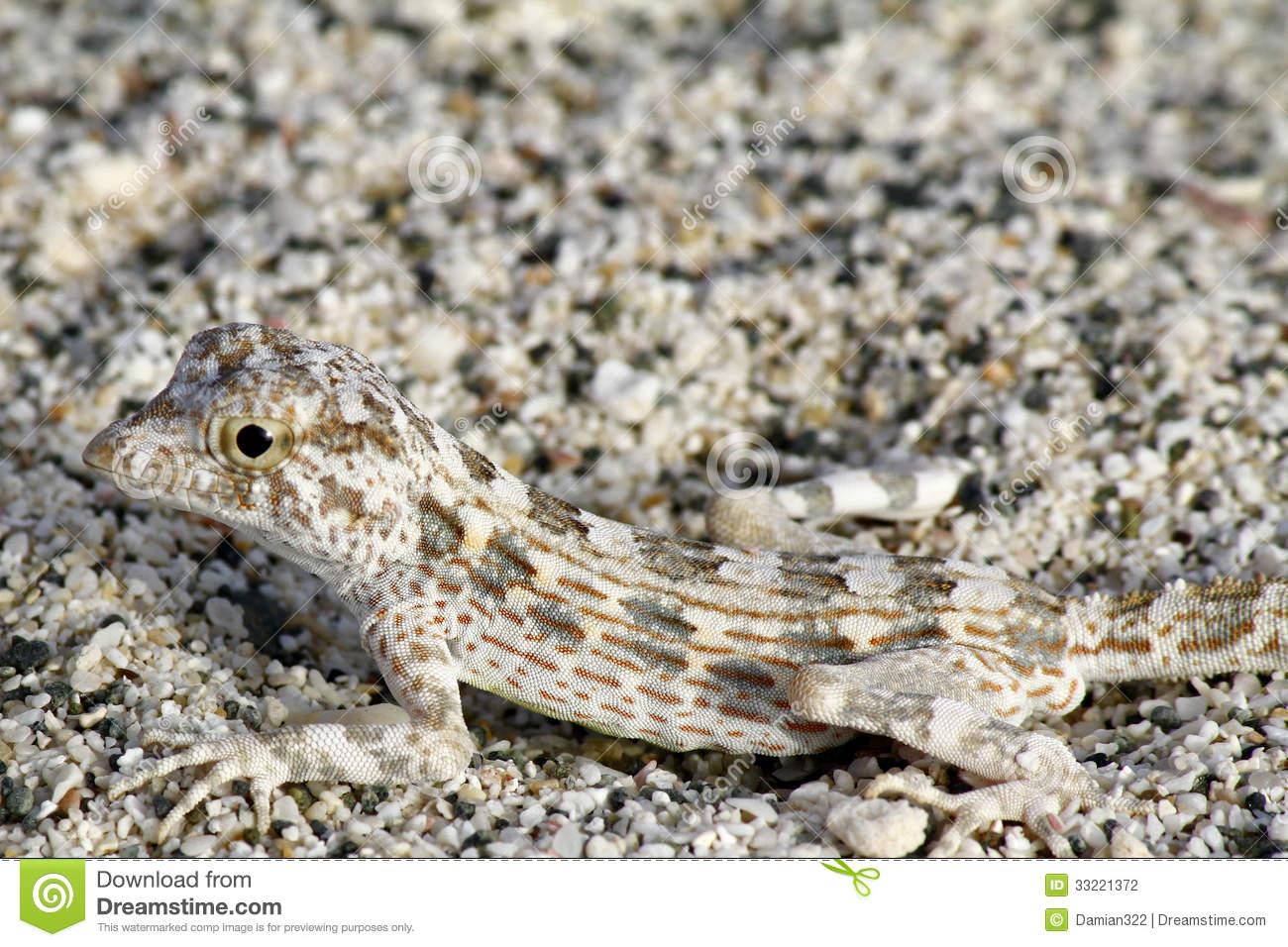 Lizards camouflage themselves by choosing rocks that best match ...