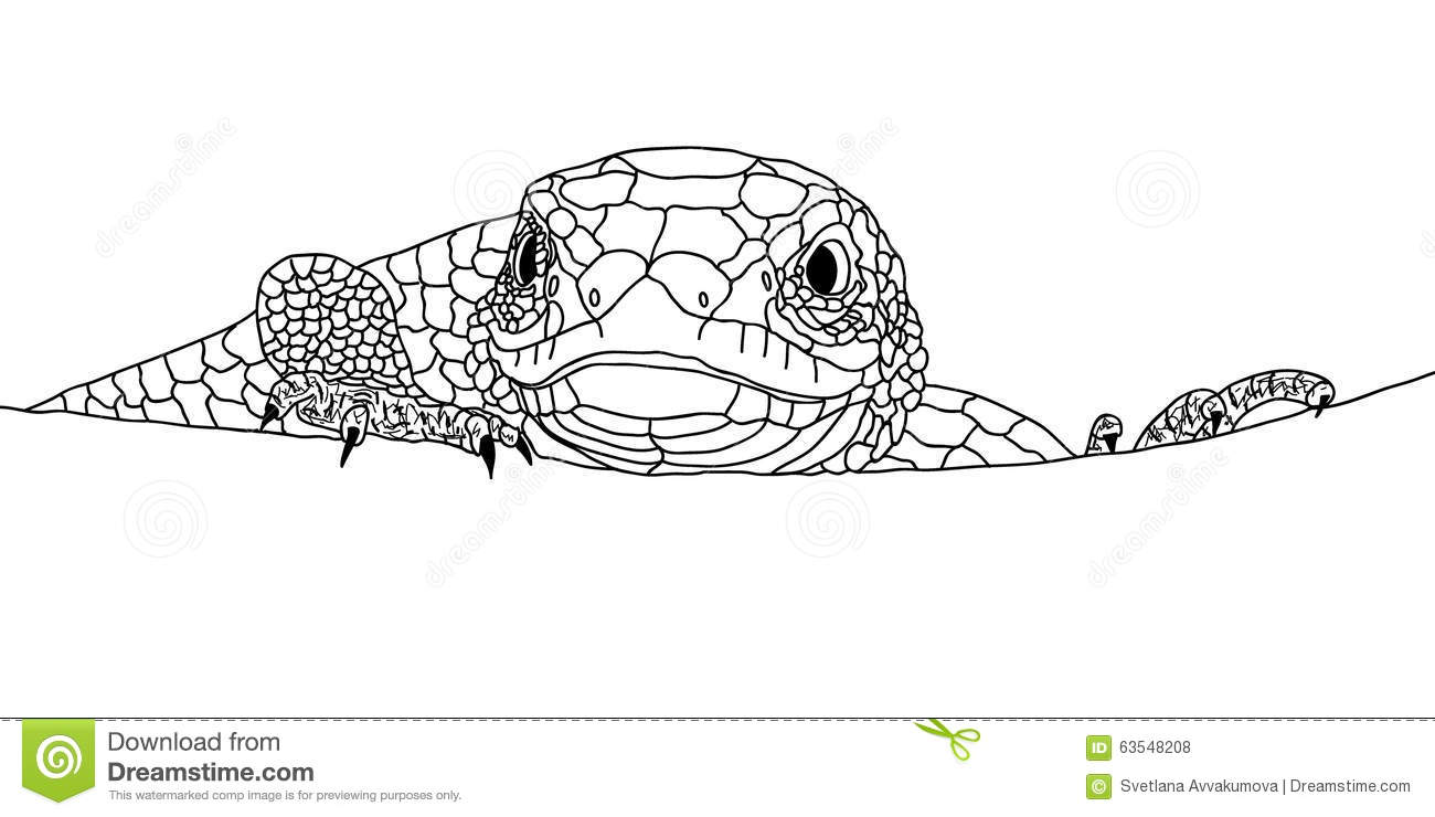 Lizard Closeup Head Eyes And Claws Doodle Image Stock