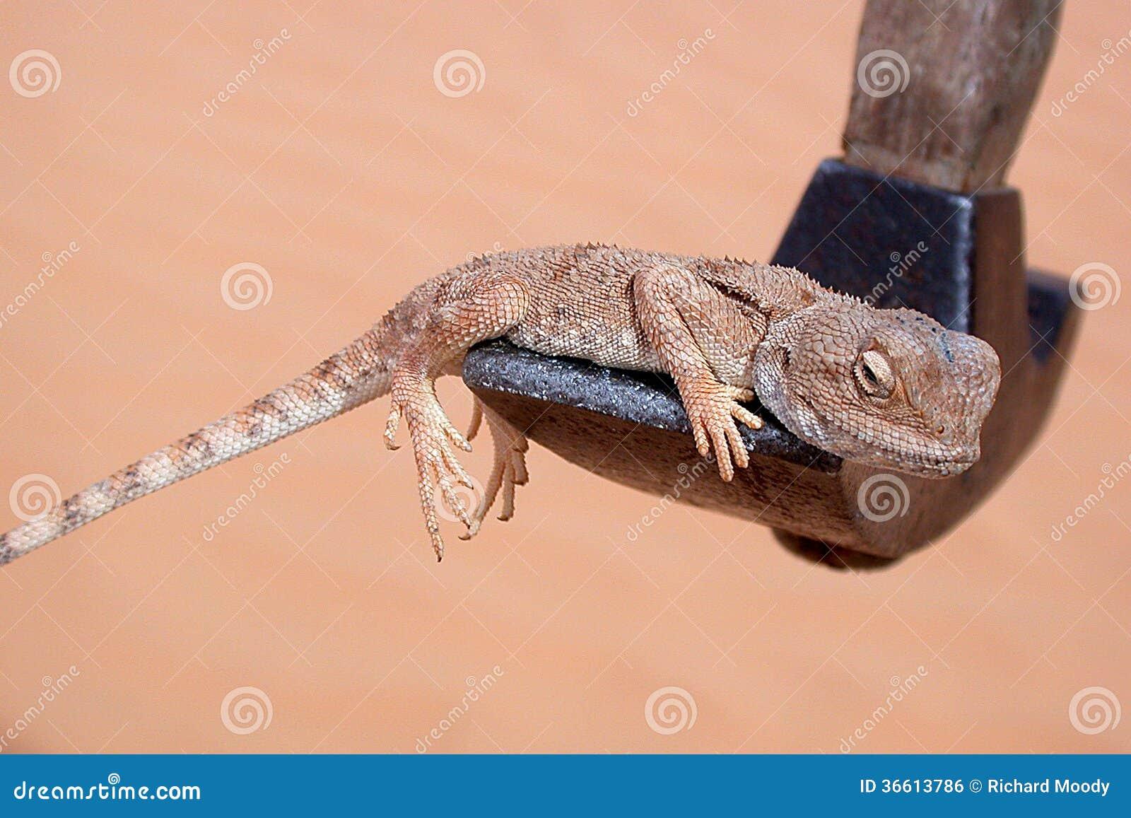 Lizard on Hammer