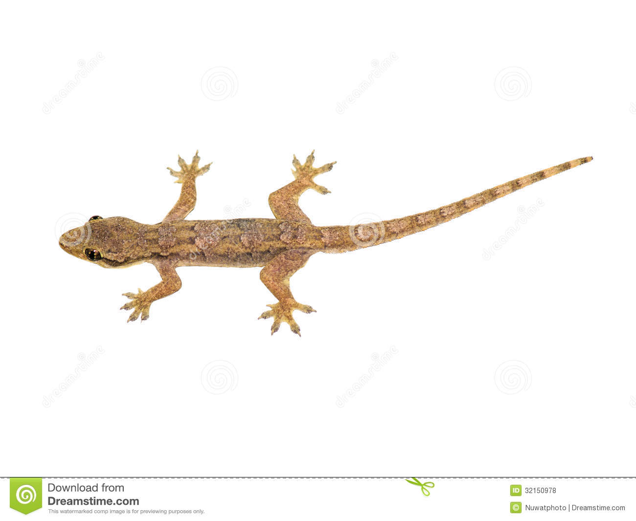 Lizard Royalty Free Stock Photos - Image: 32150978