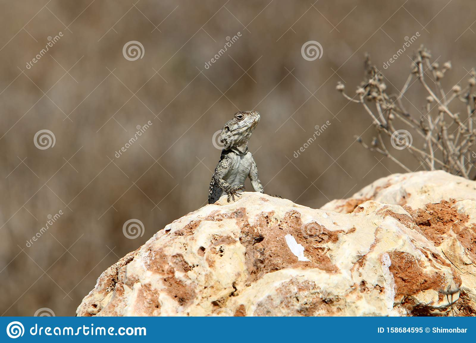 A lizard sits on a large stone on the shores of the Mediterranean Sea and basks in the sun