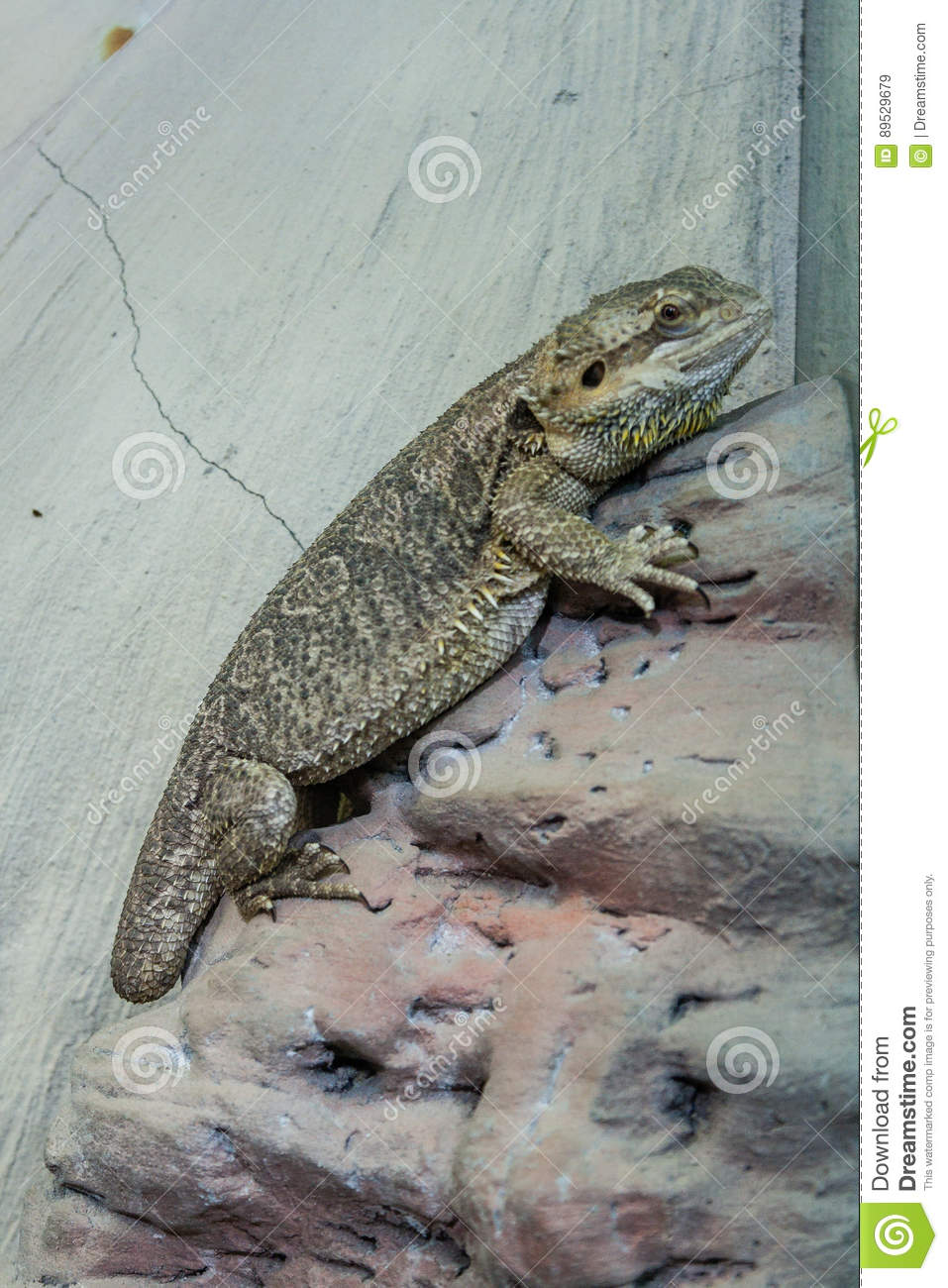 The lizard sits on a rock