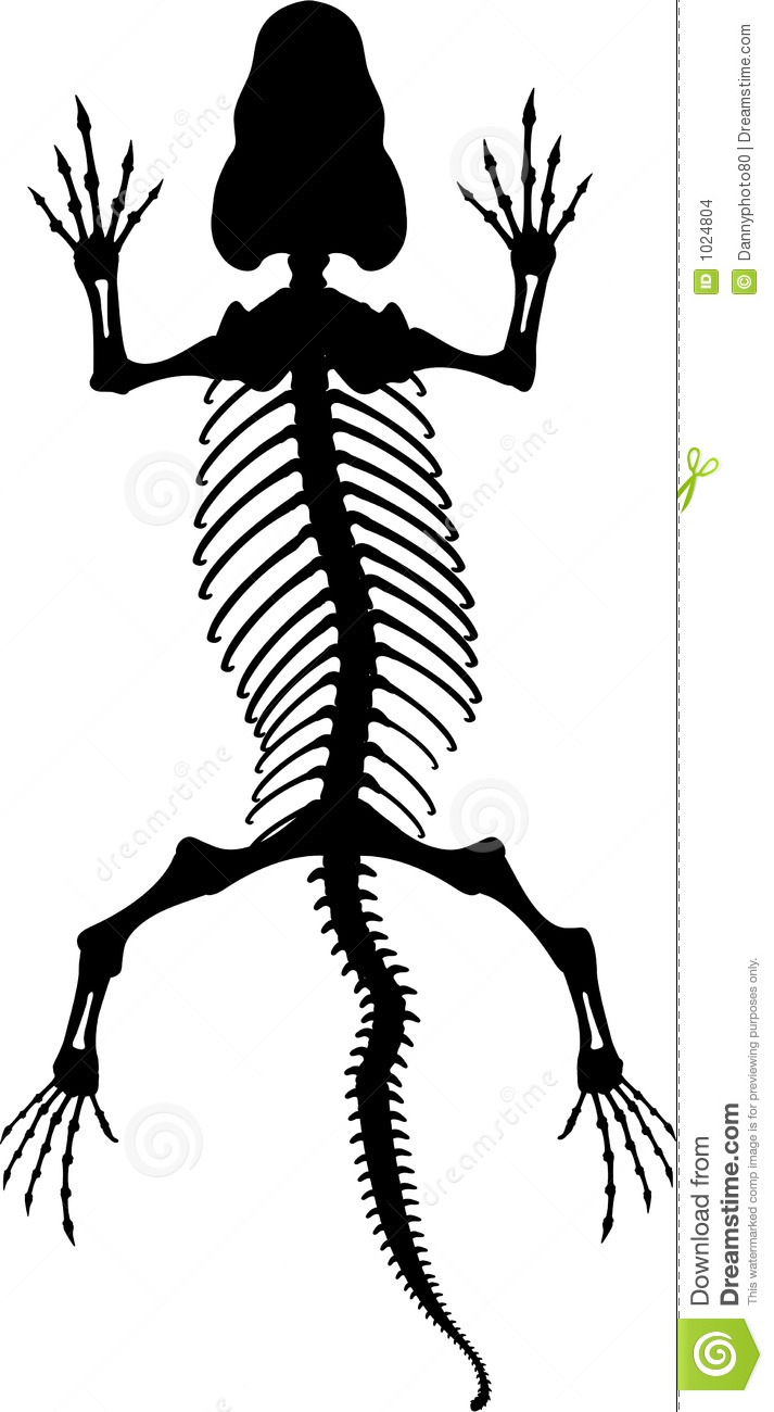 Lizard Skeleton 2 Stock Images - Image: 1024804
