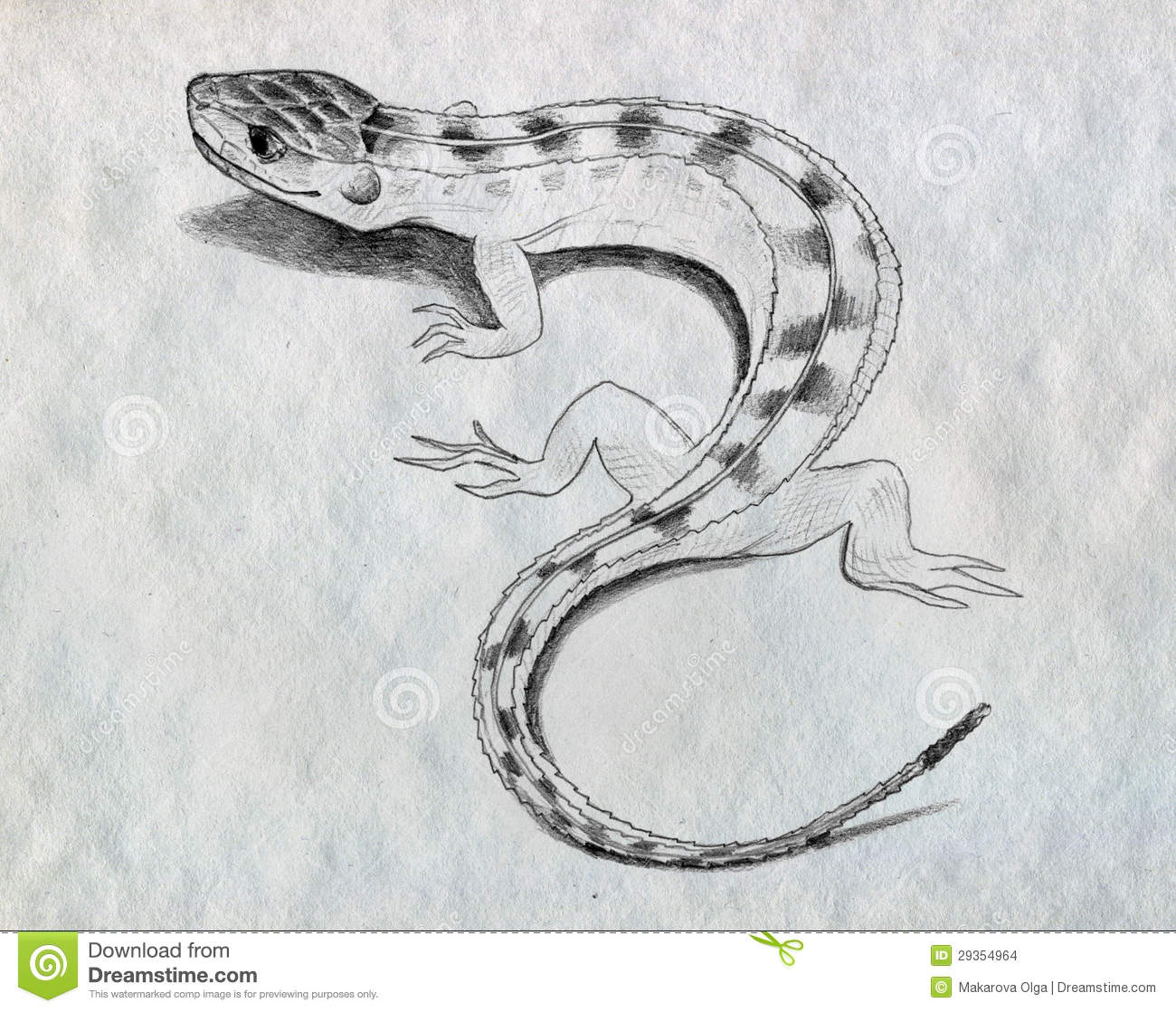 How To Draw A Lizard  wedrawanimalscom
