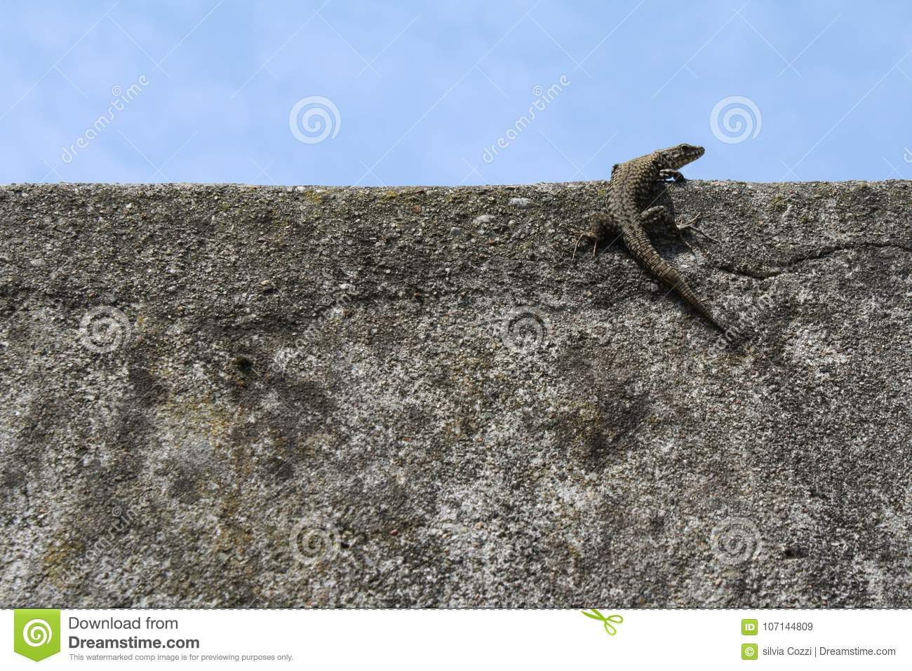 Lizard on top of a wall with blue sky background.