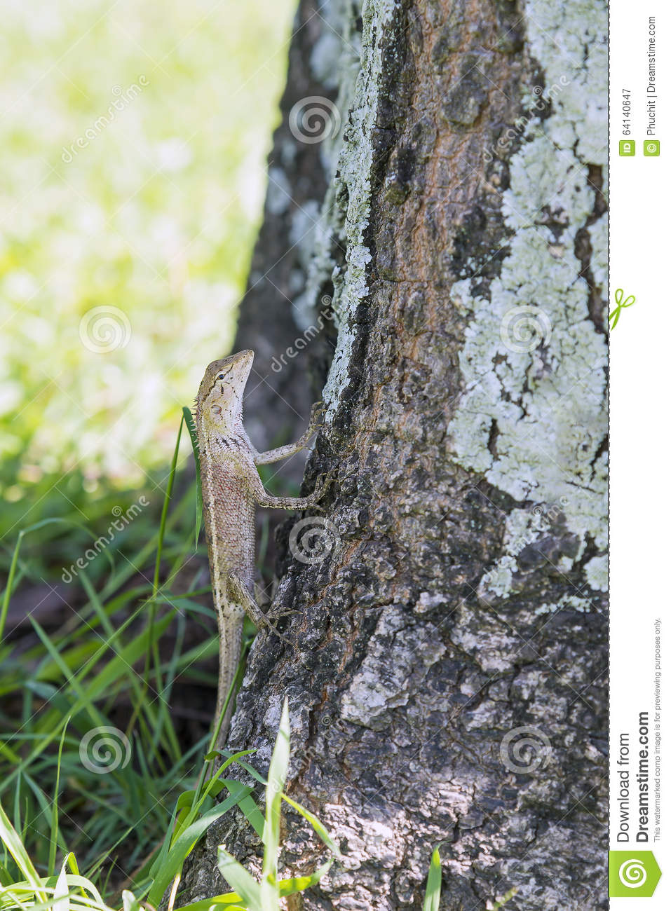 The lizard on the tree