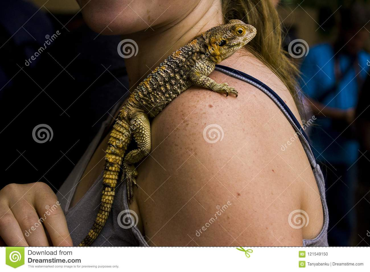 Lizard on a woman shoulder close up photography
