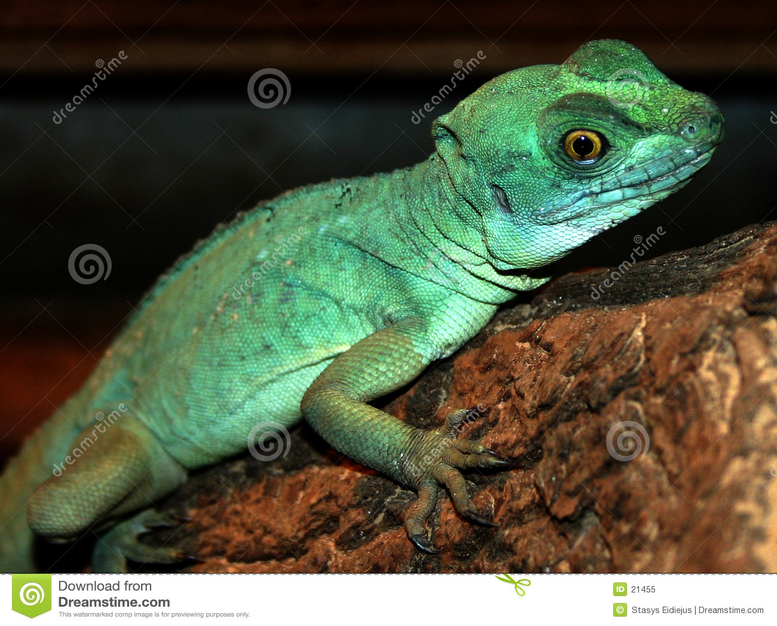 Lizard in the ZOO