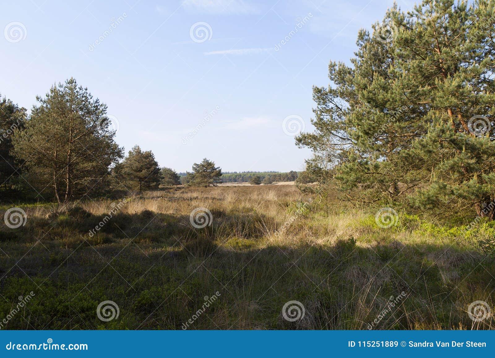 Ljungfält i tidig vår