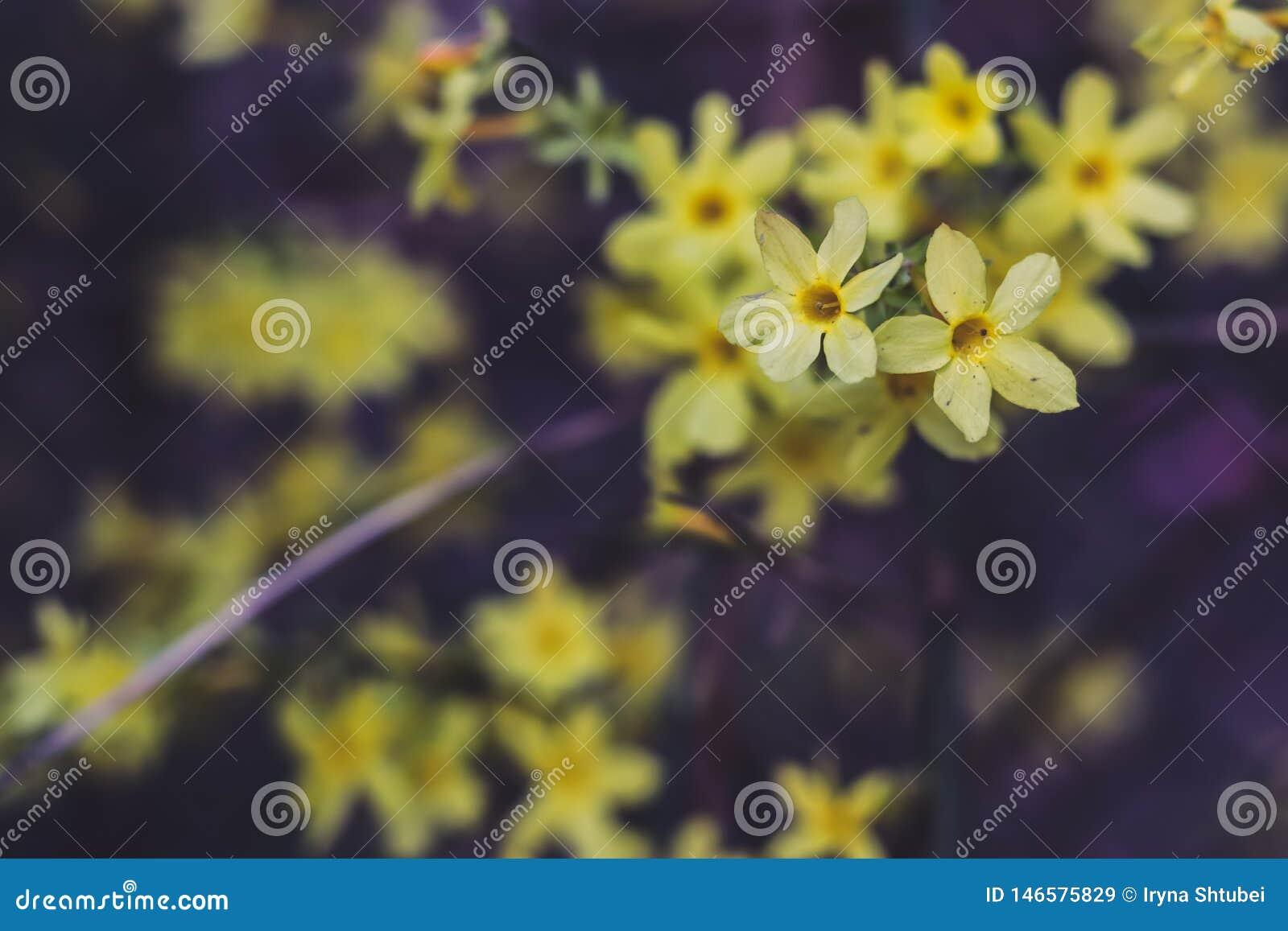 Ljus blommayellow