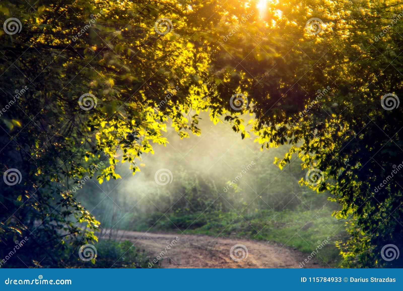 Ljus natur och mist för soluppgång