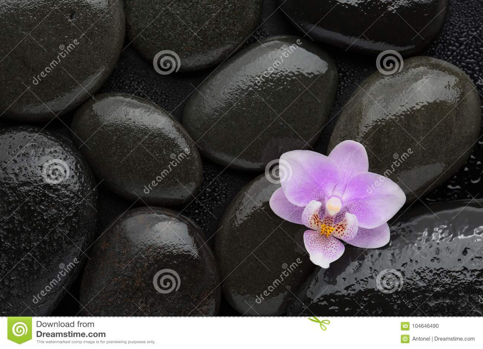 Ljus - rosa orkidé som ligger på våta svarta stenar Visat från över Tvål-, handduk- och blommasnowdrops