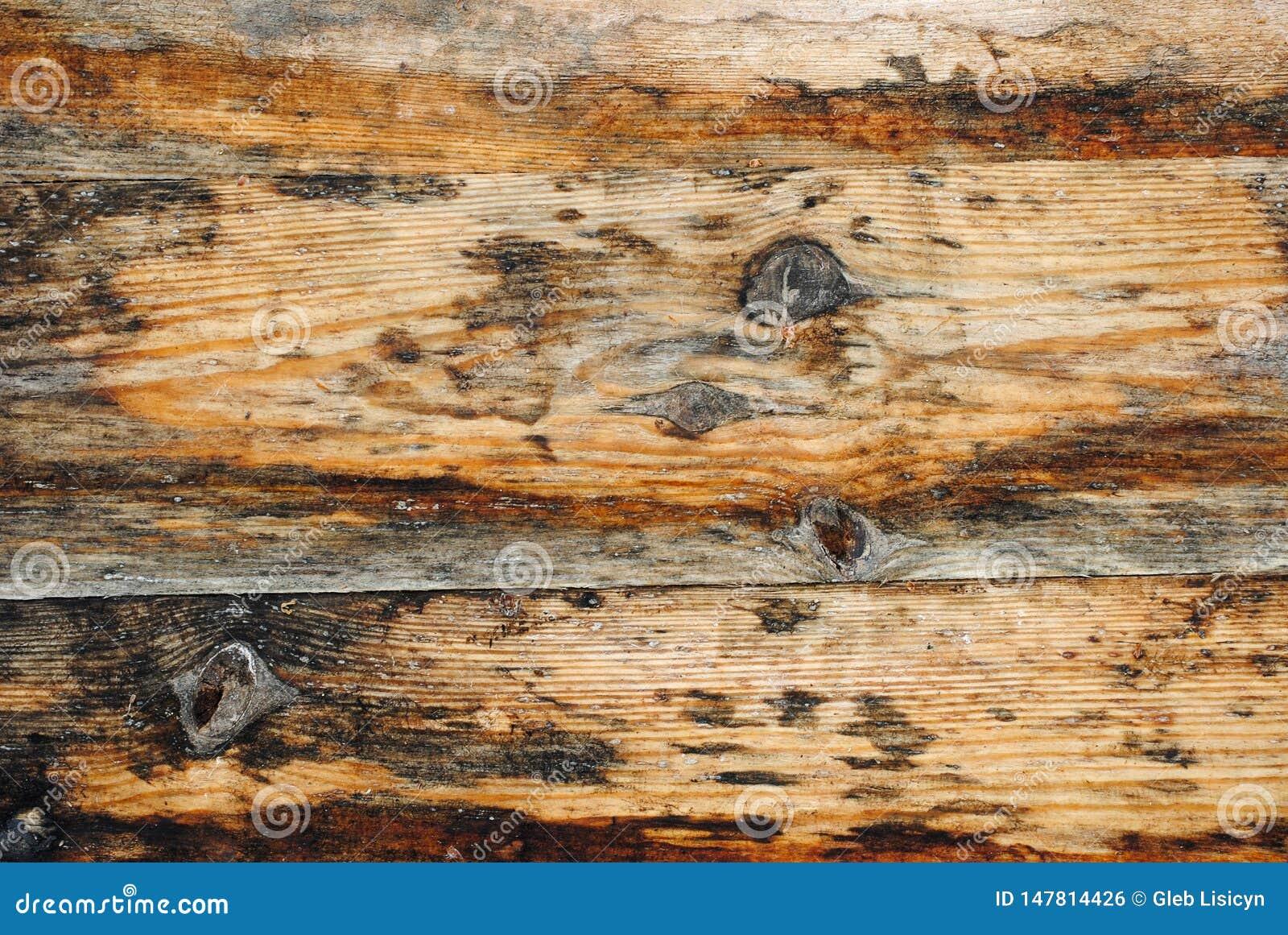 Ljus textur av gamla trätabellbräden