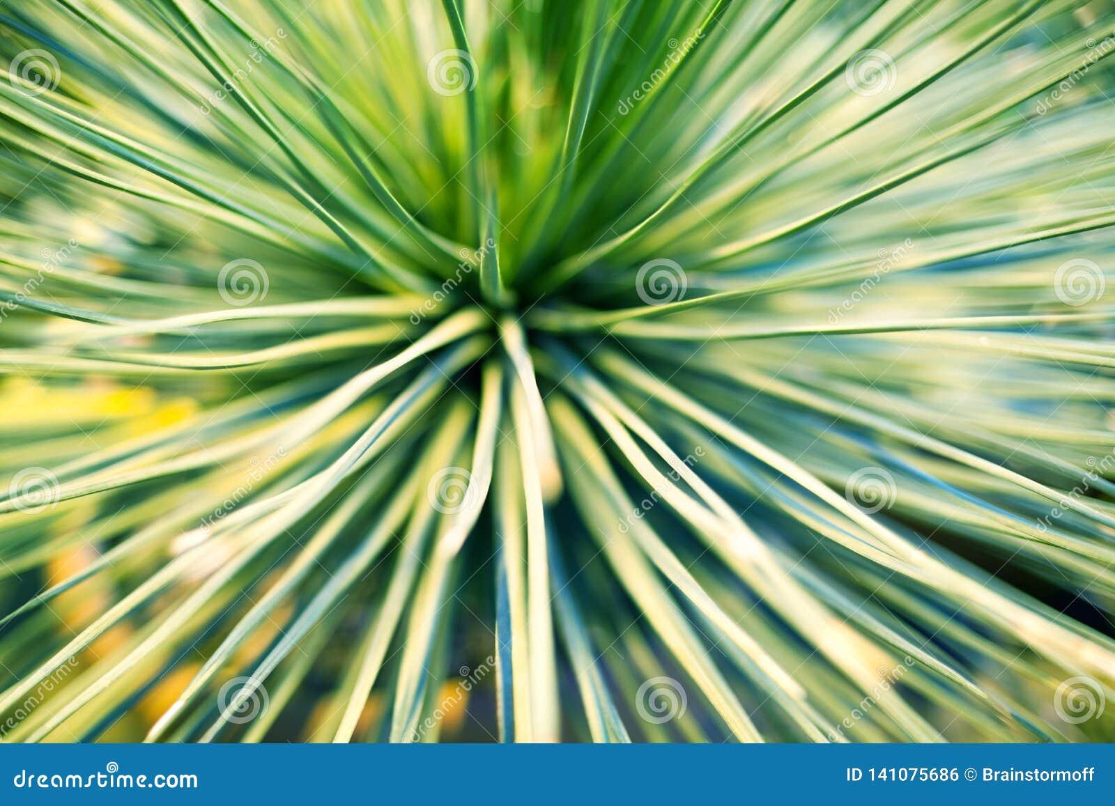 Ljust - gröna sidor av för bakgrundscloseup för palmträd eller för dekorativ houseplant den suddiga makroen