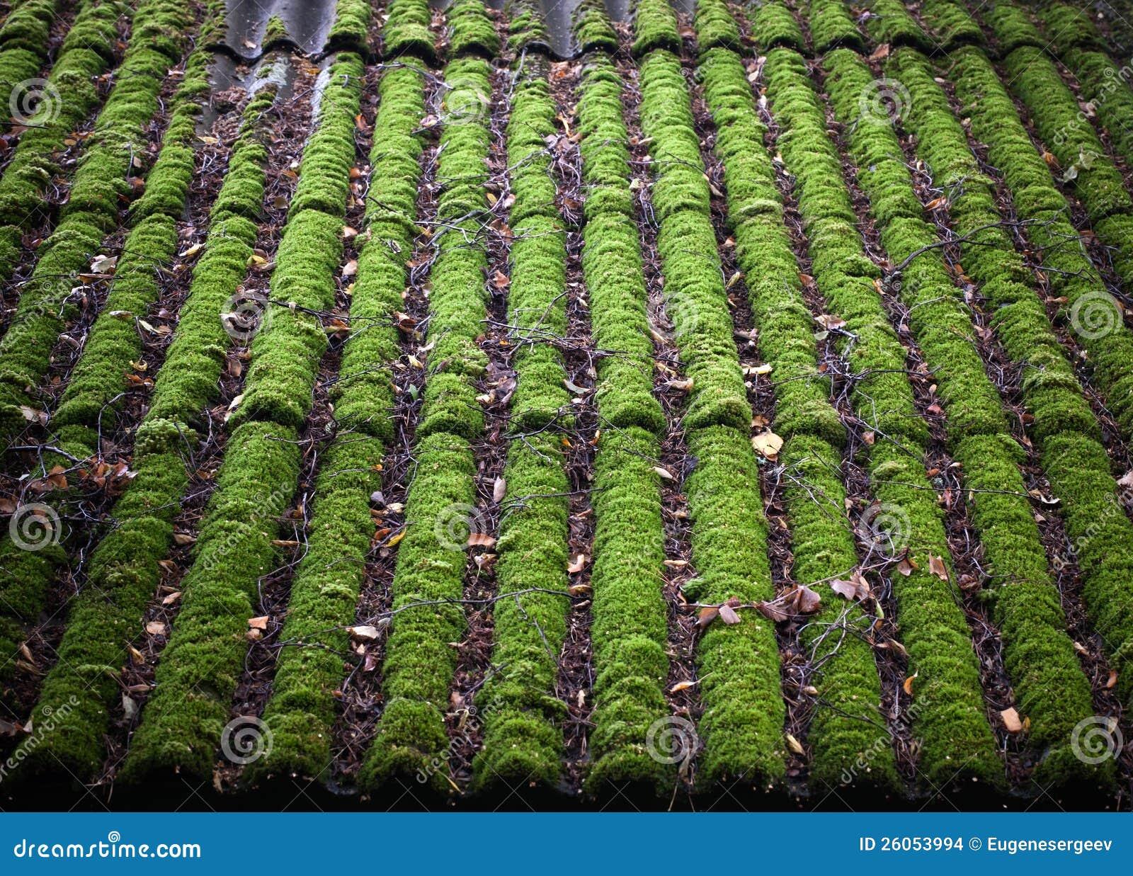 Ljust - green av det mossy taket