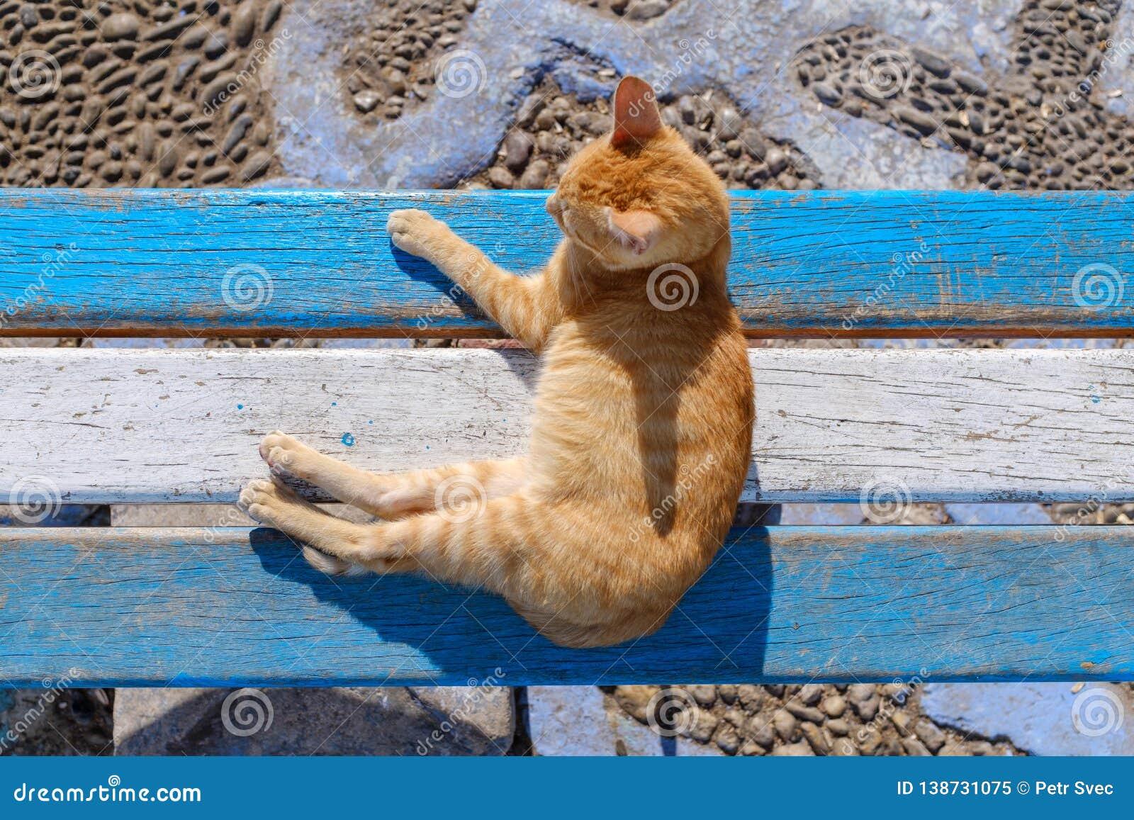 Ljust rödbrun katt på blå och vit bänk