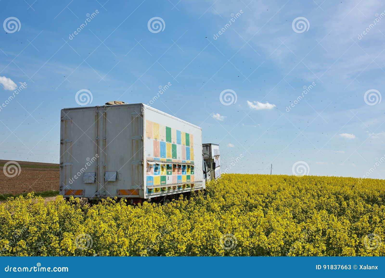 LKW Mit Bienenbienenstöcken In Einem Rapsfeld Stockbild - Bild von ...