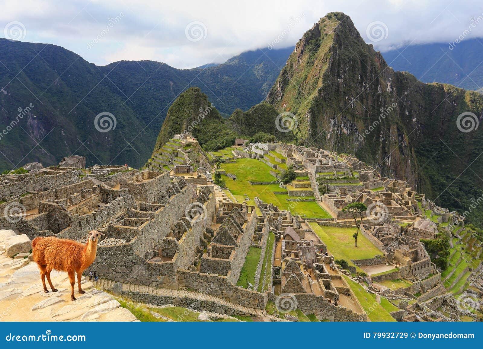 Llama που στέκεται σε Machu Picchu αγνοεί στο Περού