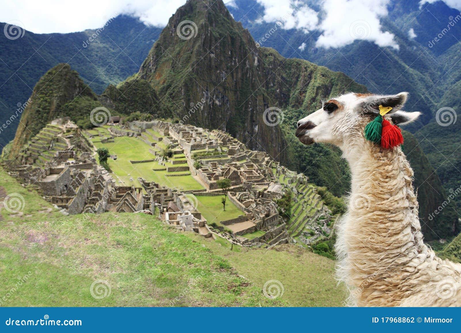 Llama at Lost City of Machu Picchu - Peru