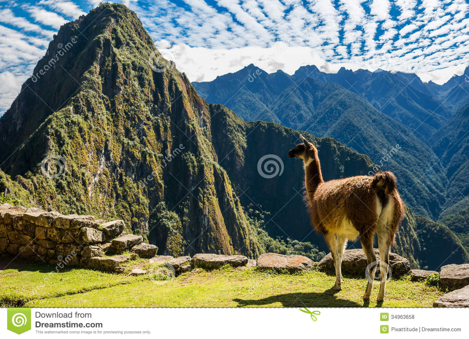 Llama Machu Picchu καταστρέφει τις περουβιανές Άνδεις Cuzco Περού