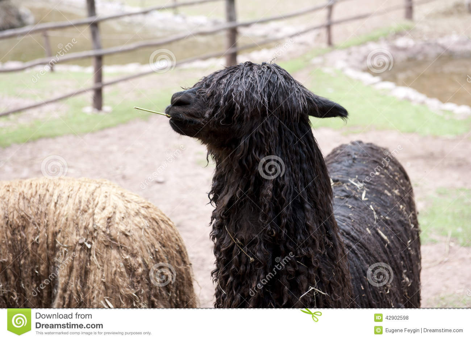 llama business plan