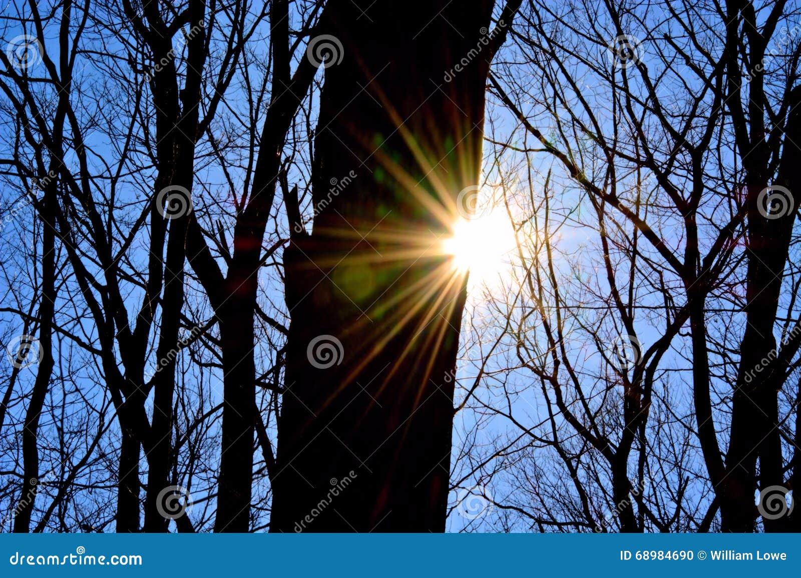 Llamarada de Sun en arbolado del bosque