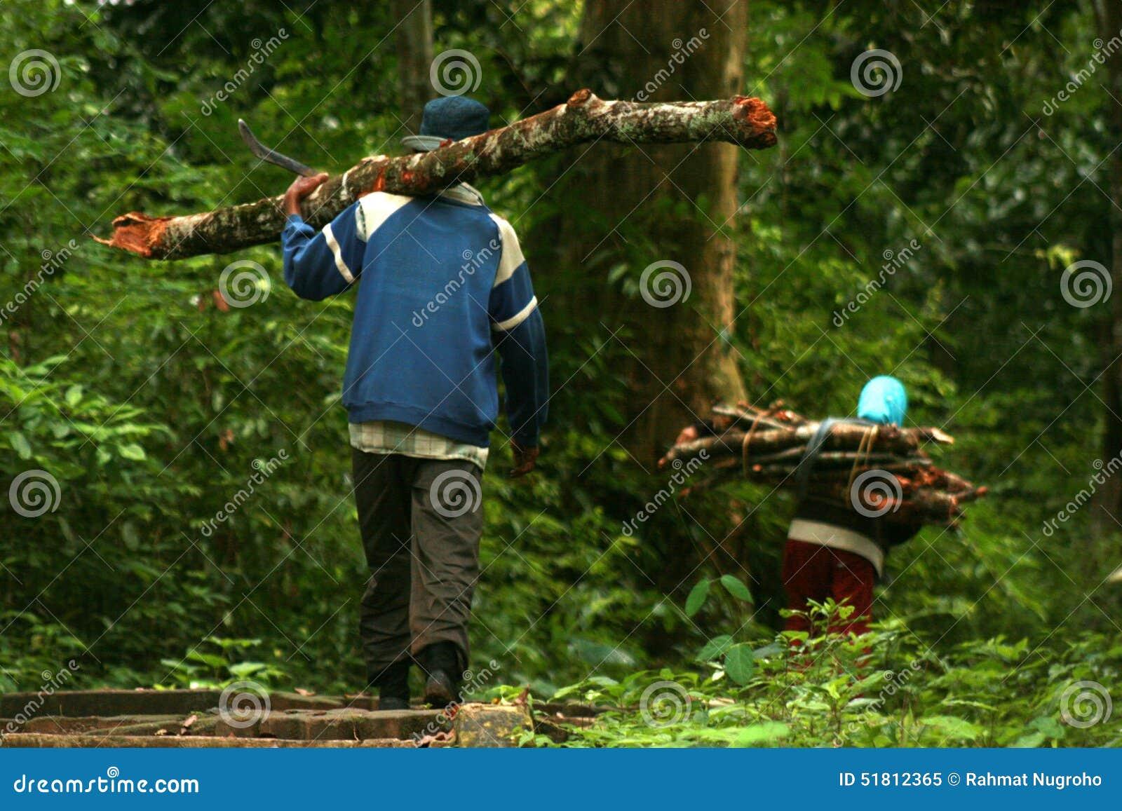 Lleva el registro de maderas